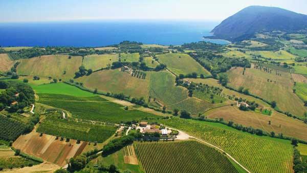 I sapori delle Marche – i vini, i prodotti gastronomici, le ricette tipiche marchigiane
